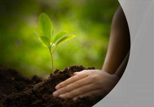 Hände, die einen Baum pflanzen, Nahaufnahme